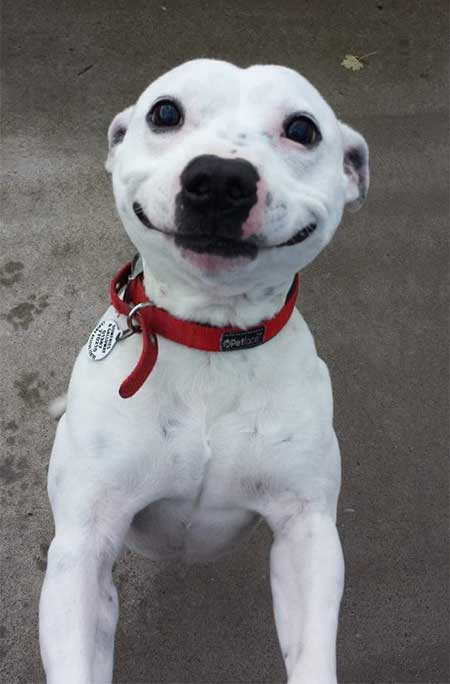 Фото улыбающихся животных
