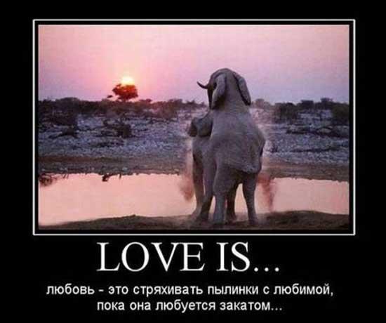 Прикольные фото про любовь
