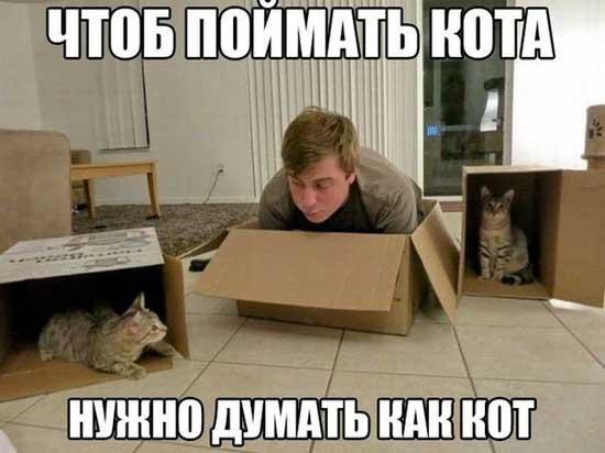 Шутки про котов