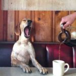 Прикольные стихи про кофе