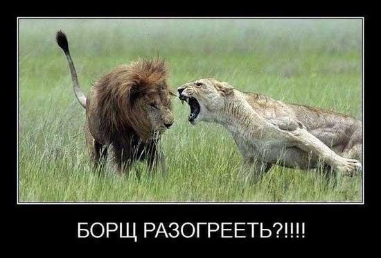 Смешные картинки со львами
