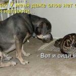 Приколы в картинках про собак и кошек