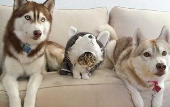 Смешные картинки с кошками и собаками