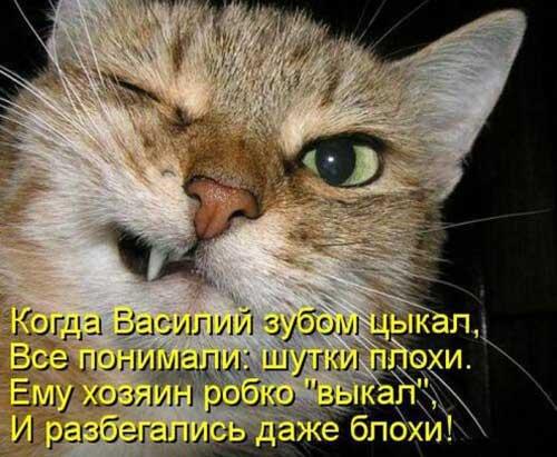Прикольные стихи про котов