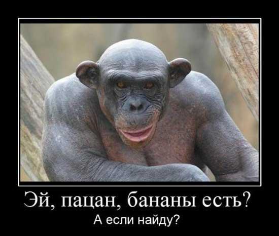 Демотиваторы с обезьянами