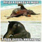 Смешные фото про море