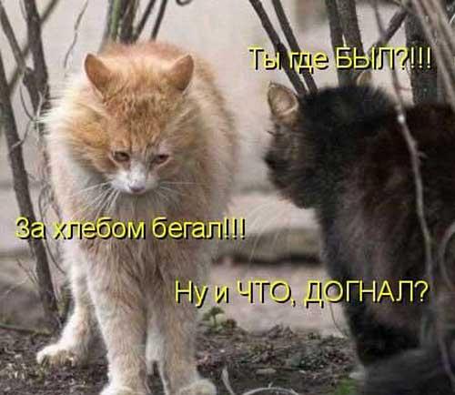 Фото приколы про котов и кошек