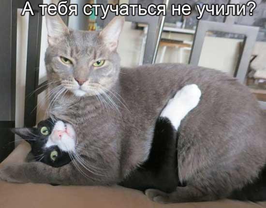 Стихи о толстых котах