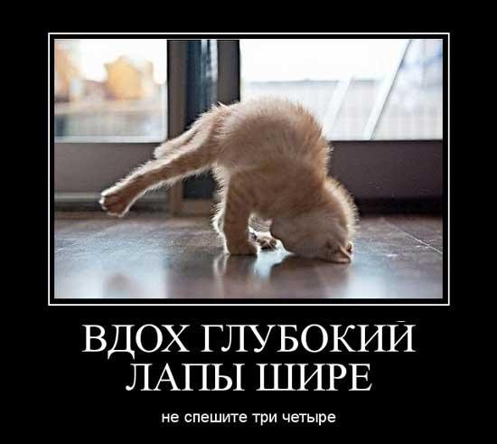 Демотиваторы про котят