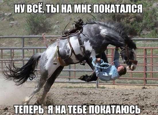 Веселые фото лошадей с надписями