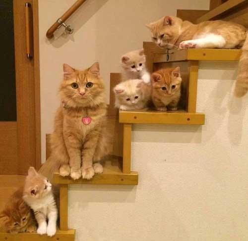 Смешные фото про кошек и котят