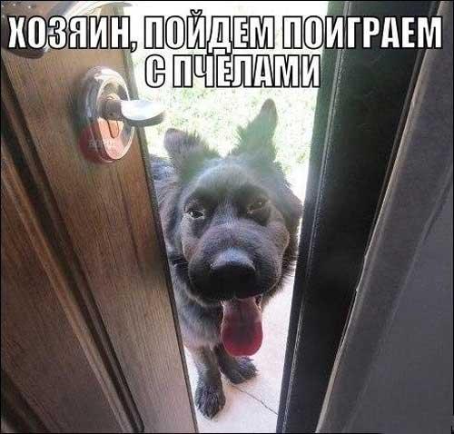 Веселые картинки с собаками