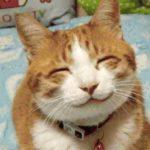 Котики улыбаются — фото