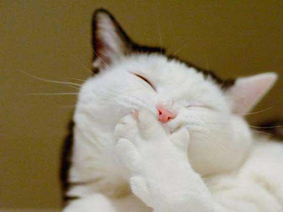 Котики улыбаются - фото