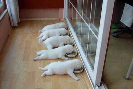 Прикольные щенки - фото