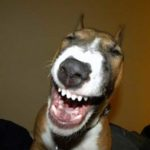 Смеющиеся собаки — фото
