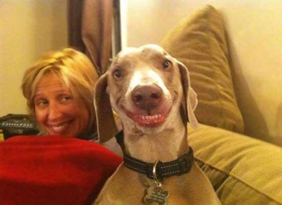 Смеющиеся собаки - фото