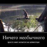 Демотиваторы про енотов