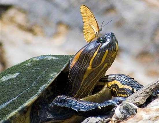 Смешные фото черепах