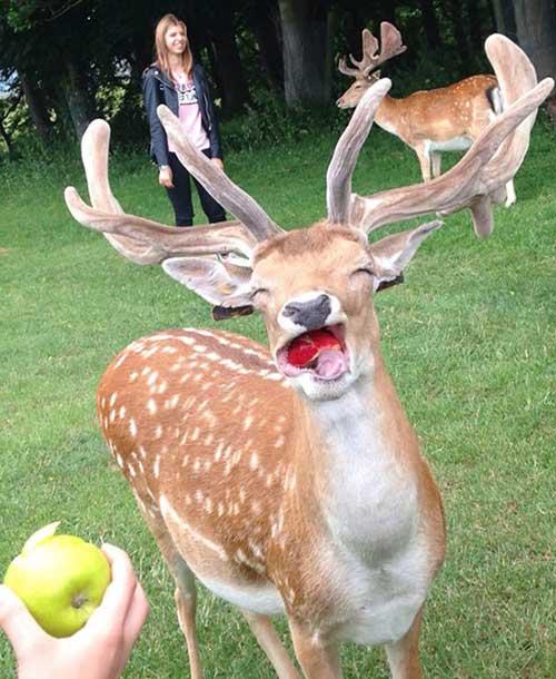 картинки смешные с оленями