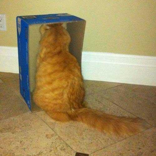 Смешные фото рыжих котов