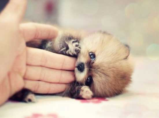 Смешные фото щенков