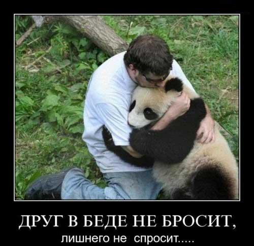 Смешные картинки с надписями про дружбу