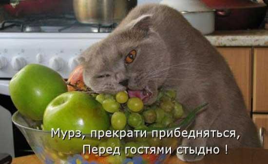 Смешные картинки про кошек