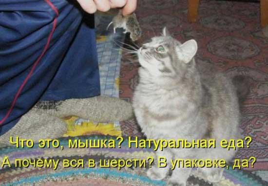 Фотографии смешных котов с надписями