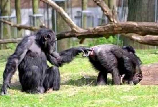 Ржачные фото животных