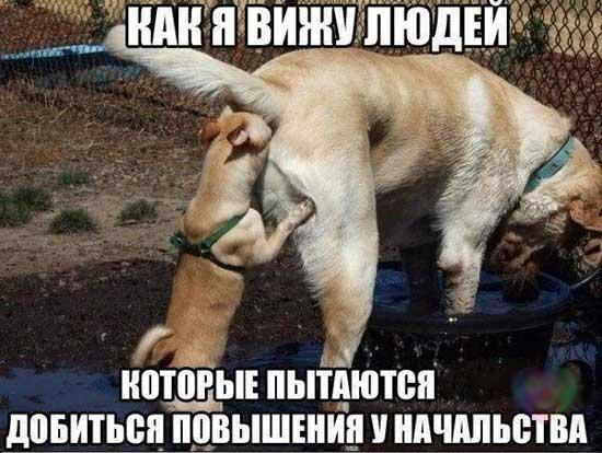 Приколы в картинках с животными и подписями