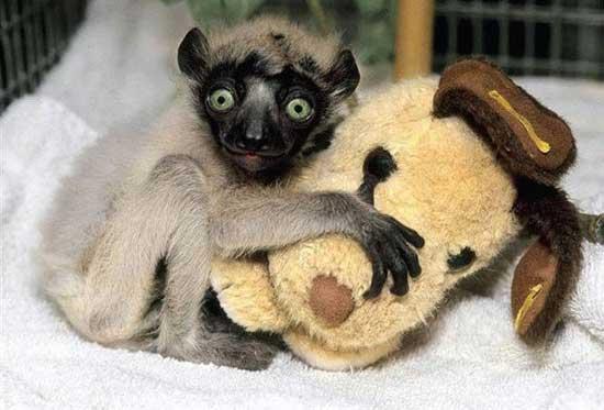 Фото забавных зверюшек
