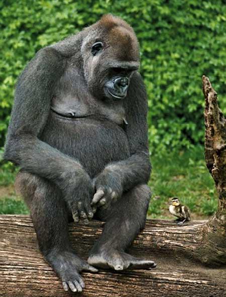 Смешные фото про животных