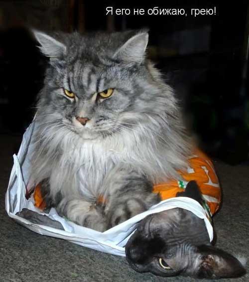 Смешные фотки про котов с надписью