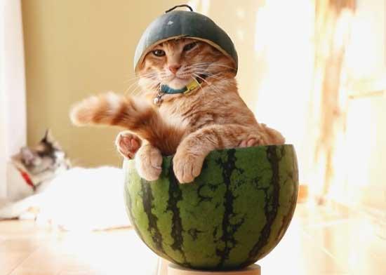 Картинки с весёлыми котами