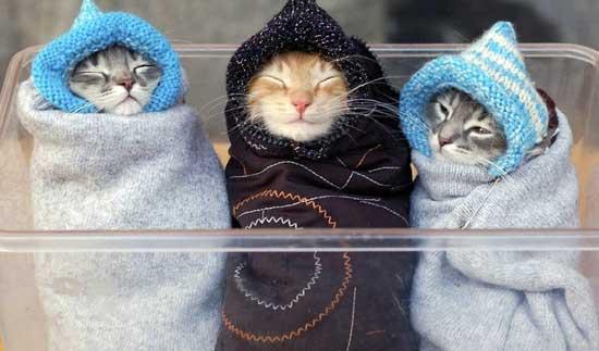 Прикольные котики