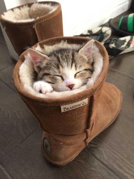 Смешные фото про котят