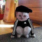 Фото котов в адидасе