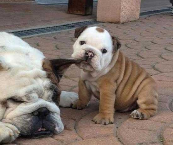 Очень смешные щенки