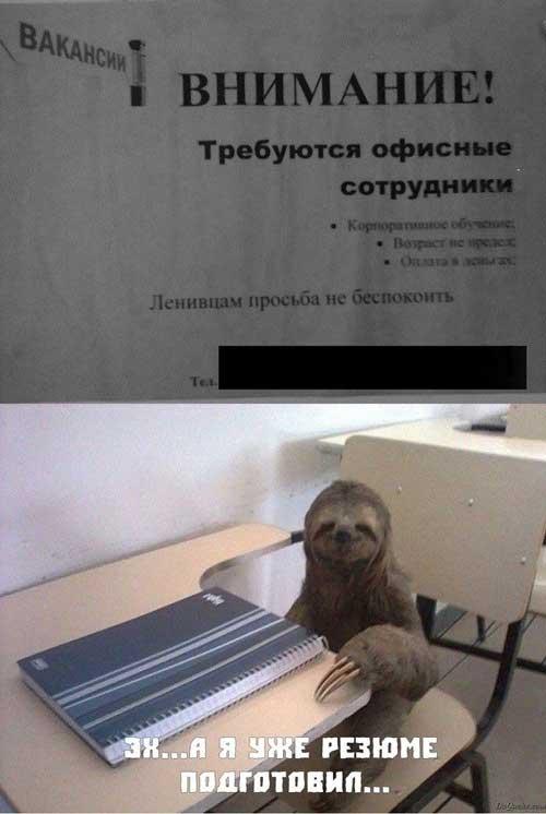Фото приколы про ленивцев