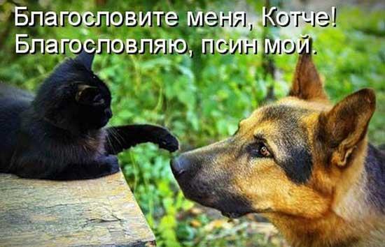 Приколы про котов и собак