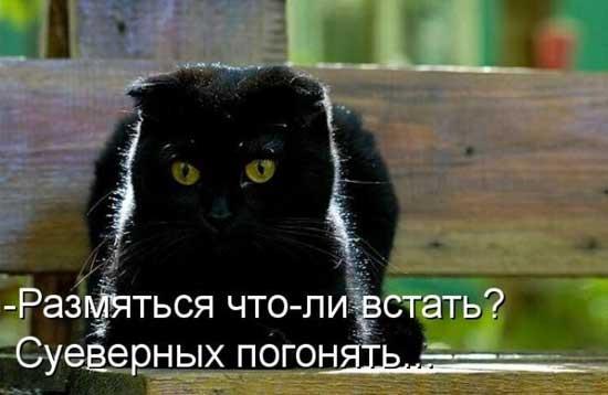 Смешные черные кошки