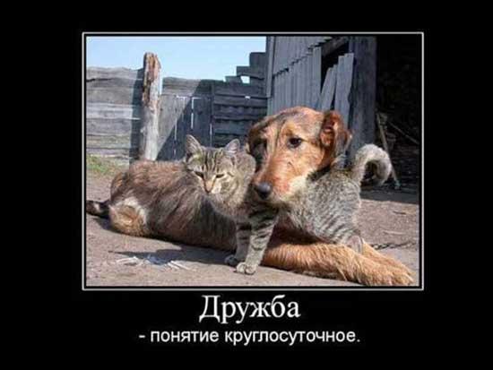 Статусы в картинках про дружбу