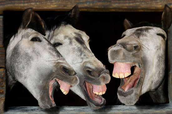 Смешные фотки лошадей