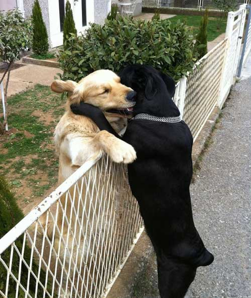 Прикольные смешные фото про любовь