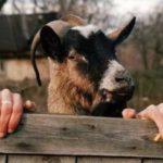 Смешные фото приколы про животных