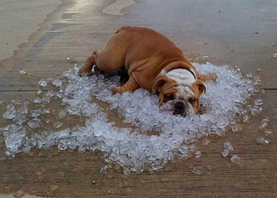 Прикольные картинки про жару