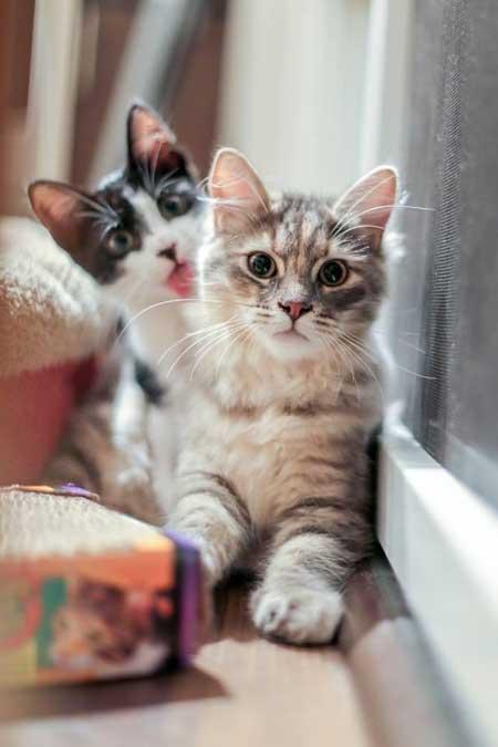 Милые смешные котята