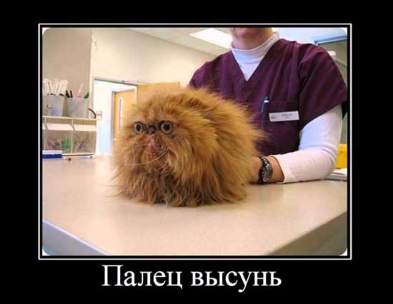 Самые ржачные демотиваторы про котов