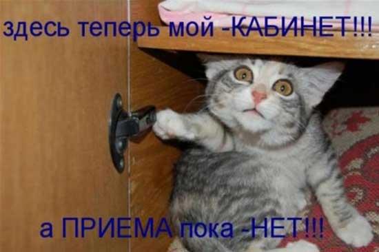 Смешные коты - фото с надписями